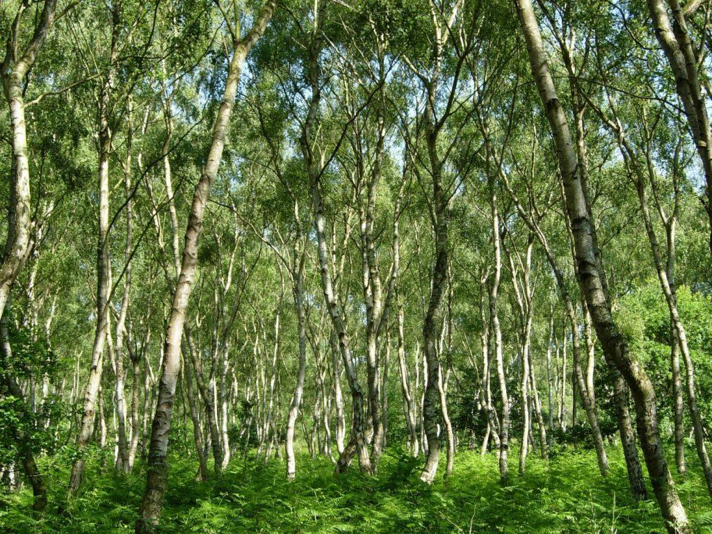 Шервудский лес